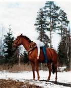 Uten tittel (Hest)